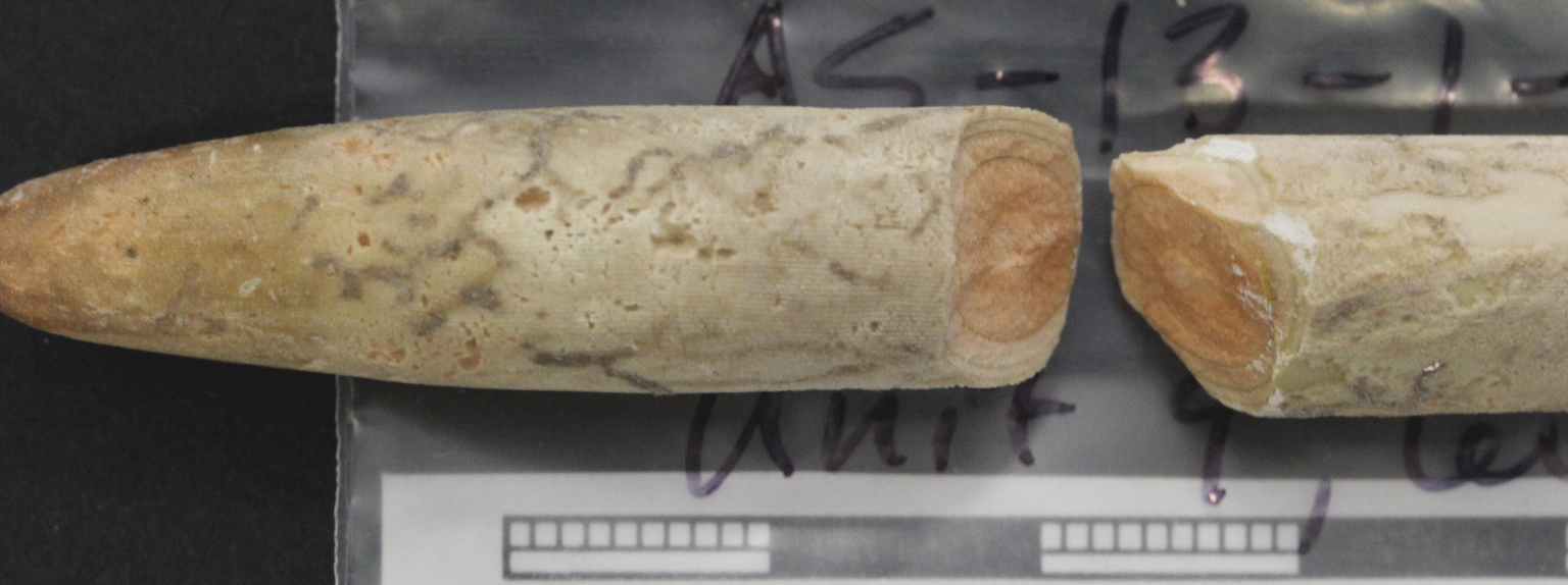 Echinoid spine To'aga